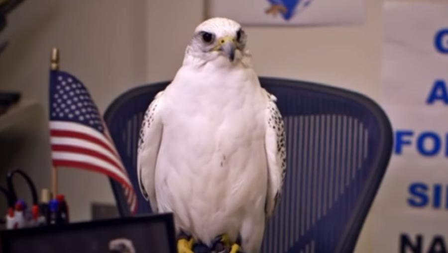 Why a Falcon?